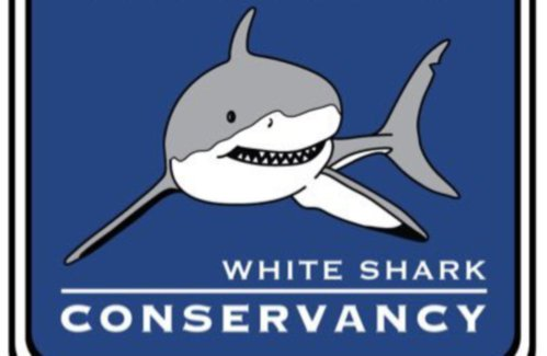 a report on the nonprofit organization atlantic white shark conservancy The atlantic white shark conservancy is constantly on the hunt for donations to help keep its research efforts each summer on the oceans off cape cod going strong but recent contributions sent to the nonprofit organization required no bait for that, they have an unlikely person to thank: president trump.
