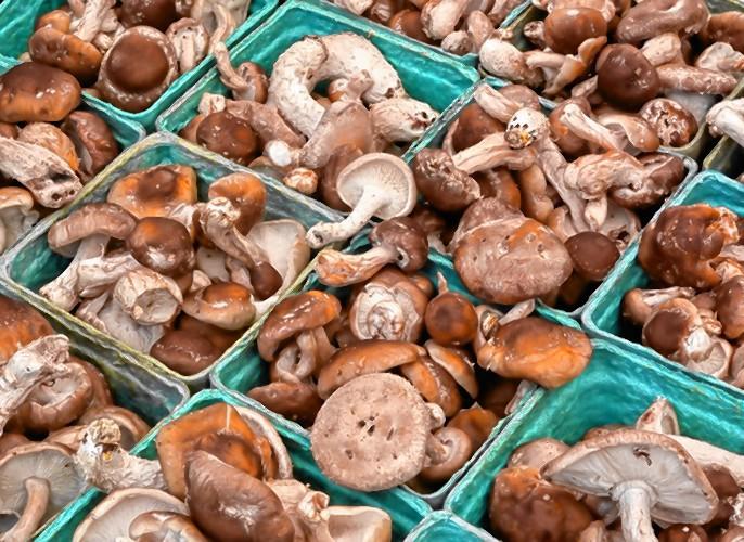 Mushrooms shii take farms