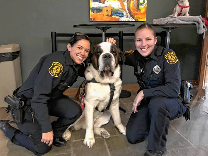 The Recorder In Tragedy St Bernard Dogs Start The