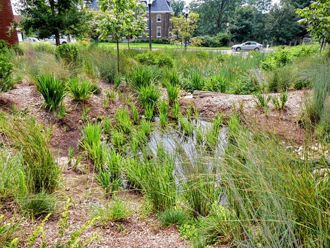 The Recorder Between The Rows Rain Gardens Runneth Over