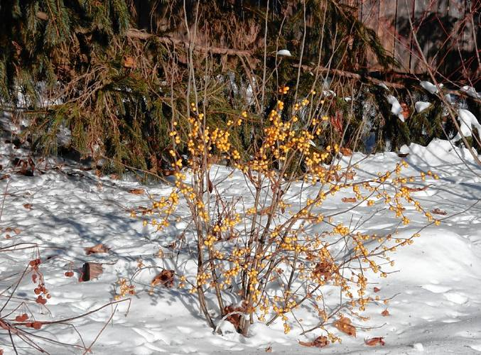 Between The Rows: Plants That Add Interest To Your Winter Garden
