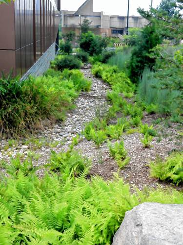 The Recorder - Between the Rows: Rain gardens runneth over
