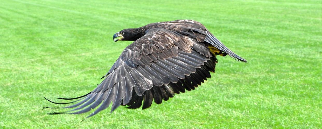 The Recorder Newly Mended Eagle Soars In Memoriam