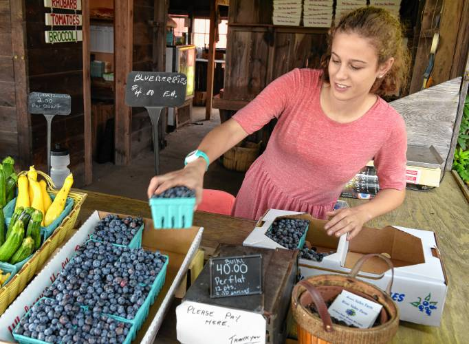 The Recorder - Blueberries are ready: Pick 'em while you can